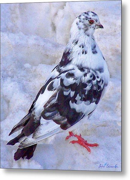 Pigeon On Ice  1 Metal Print