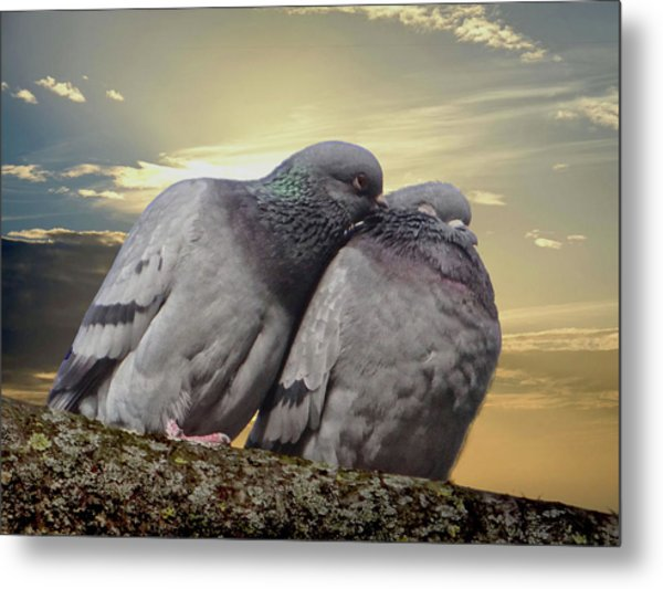 Pigeons In Love, Smooching On A Branch At Sunset Metal Print