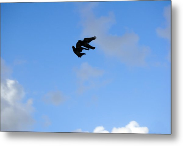 Pigeons Shadow Metal Print