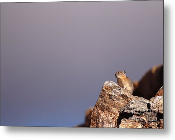 Pika Perched High Among Stormy Skies Metal Print