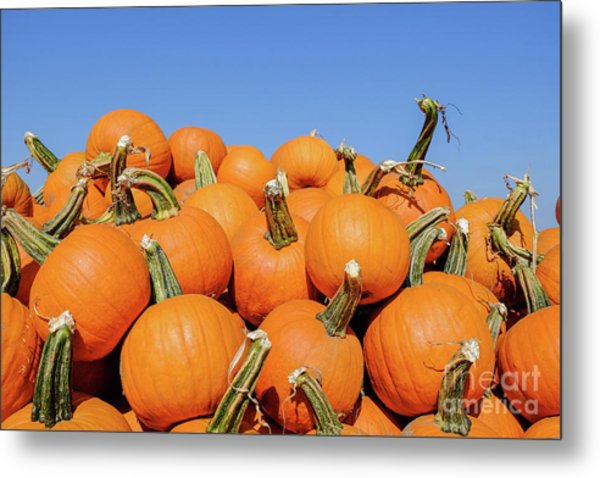 Pile Of Pumpkins Metal Print