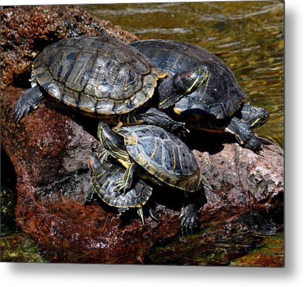 Pile Of Sliders - Turtles Metal Print