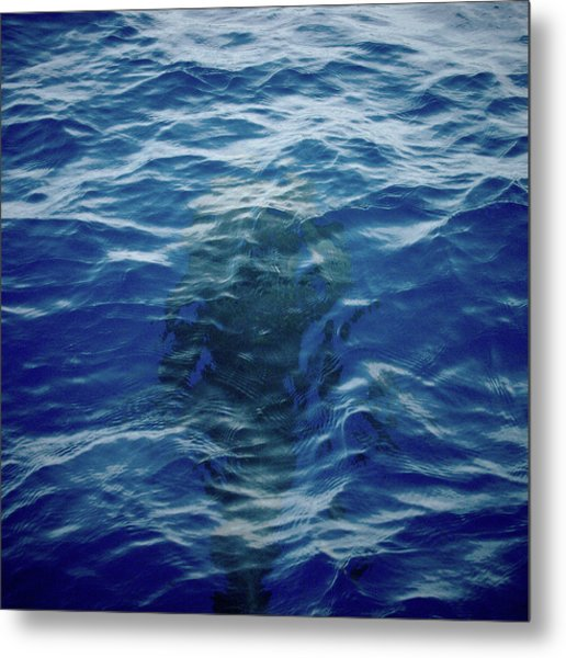 Pilot Whale 9 The Mermaid  Metal Print