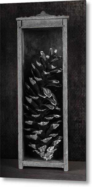 Pine Cone In A Box Still Life Metal Print