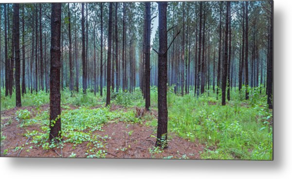 Metal Print featuring the photograph Pine Grove And Fog In Charlotte Nc Panorama by Ranjay Mitra