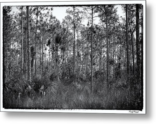 Pine Land In B/w Metal Print by Rudy Umans