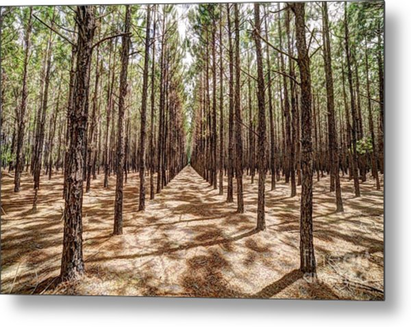 Pine Plantation Wide Color Metal Print