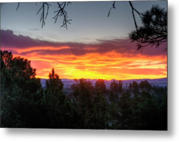Pine Sunrise Metal Print