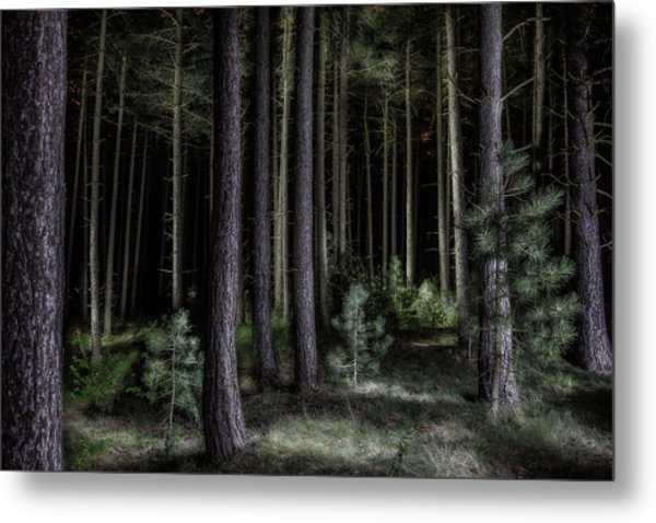 Pine Tree Forest At Night Metal Print