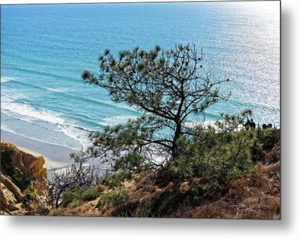 Pine Tree On Coast Metal Print
