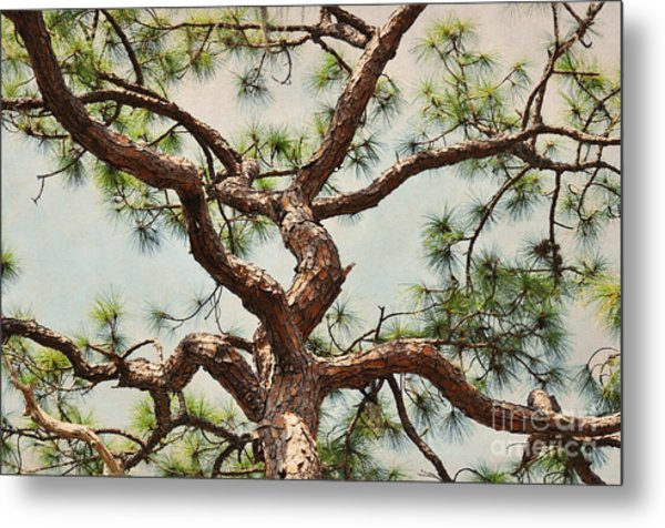 Pine Tree Metal Print by Rose  Hill