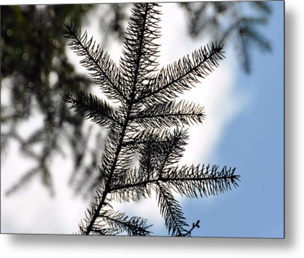 Pine View Metal Print by JAMART Photography