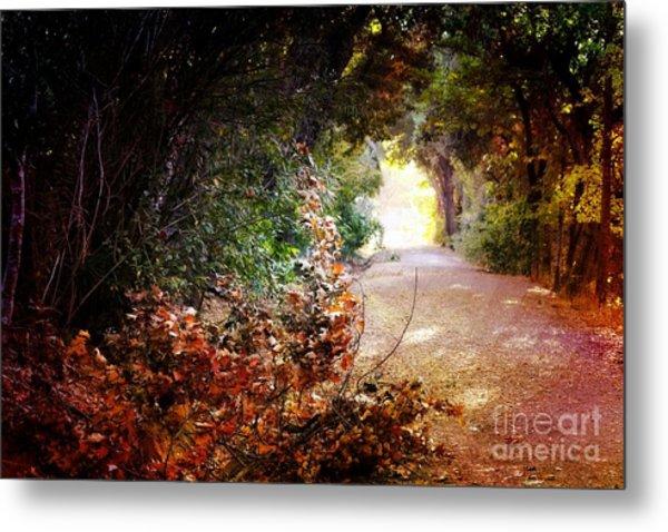 Piner Creek Path Metal Print