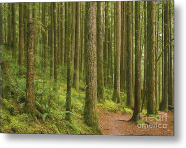 Pines Ferns And Moss Metal Print