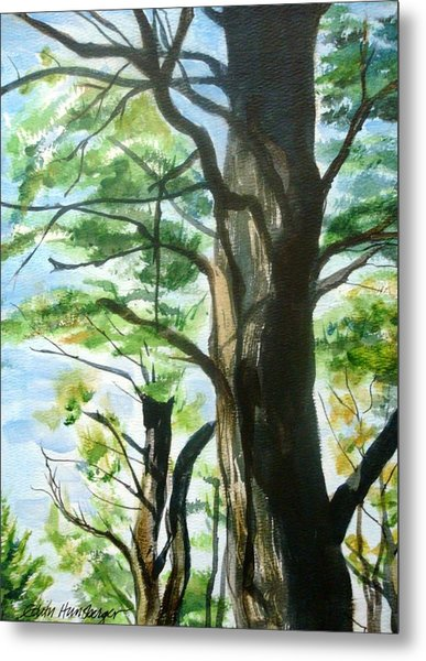 Piney Woods Metal Print