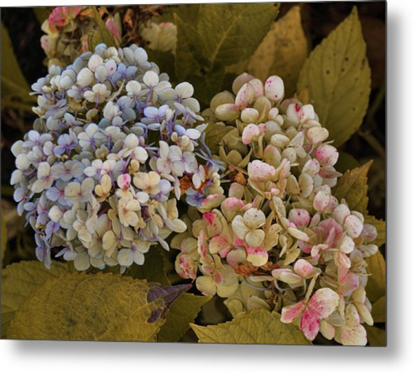 Pink And Blue Metal Print by JAMART Photography