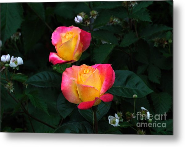Pink And Yellow Rose With Raspberrys Metal Print