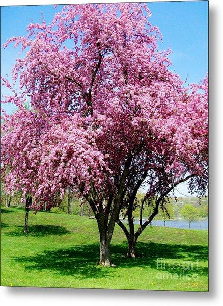 Pink Blossom Tree Metal Print by Marsha Heiken