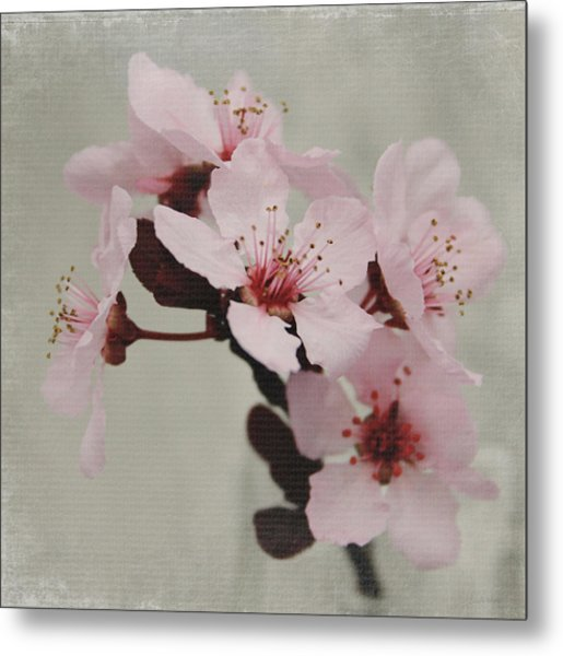Pink Blossoms 1- Art By Linda Woods Metal Print