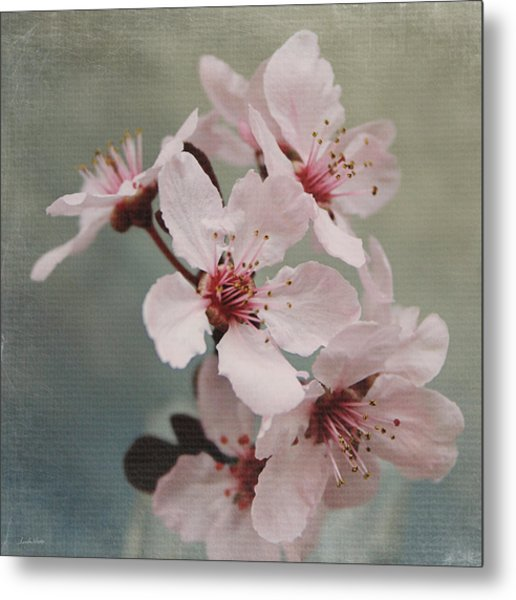 Pink Blossoms 2- Art By Linda Woods Metal Print