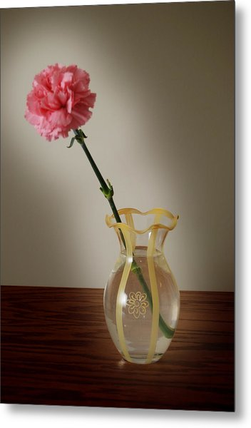 Pink Carnation Metal Print by Dave Chafin