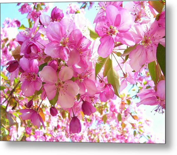 Pink Cherry Blossoms Metal Print