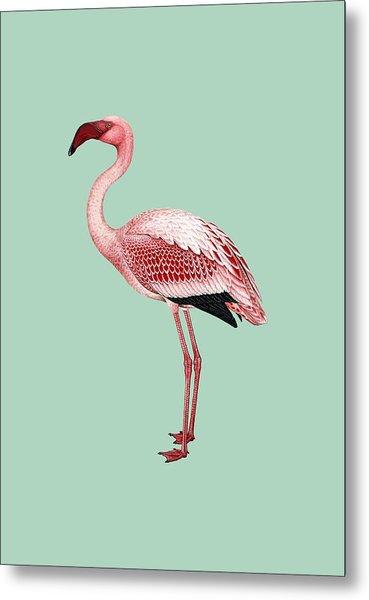 Pink Flamingo Isolated Metal Print