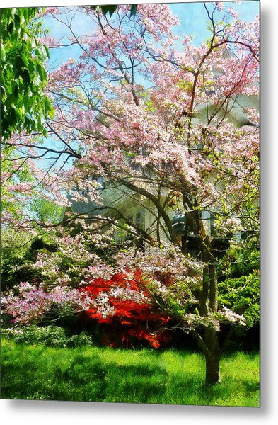 Pink Flowering Dogwood Metal Print by Susan Savad