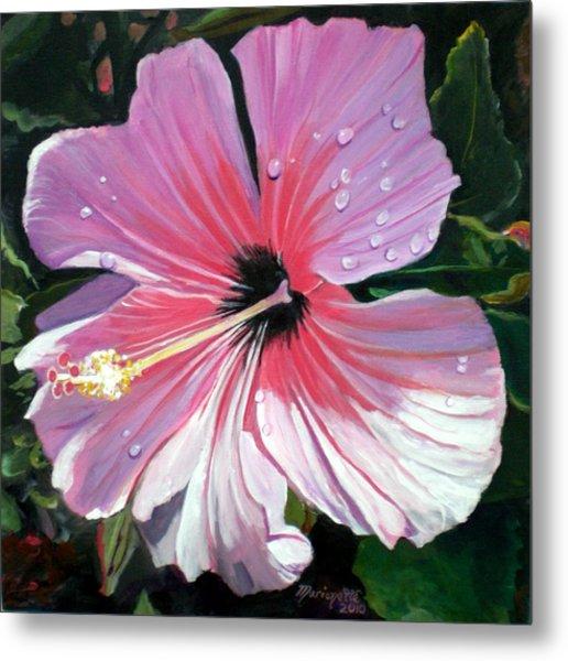Pink Hibiscus With Raindrops Metal Print