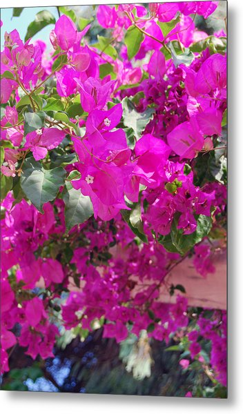 Pink In Rohodes Metal Print by Armand Hebert