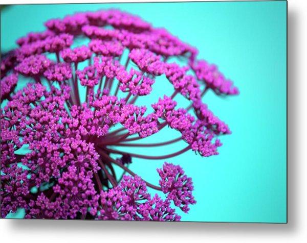 Pink Lace 02 Metal Print