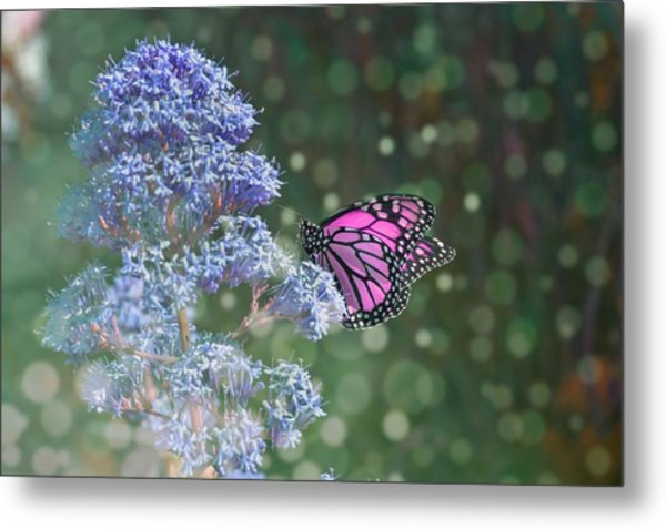 Metal Print featuring the photograph Pink Lady by Alison Frank