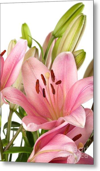 Pink Lilies 07 Metal Print