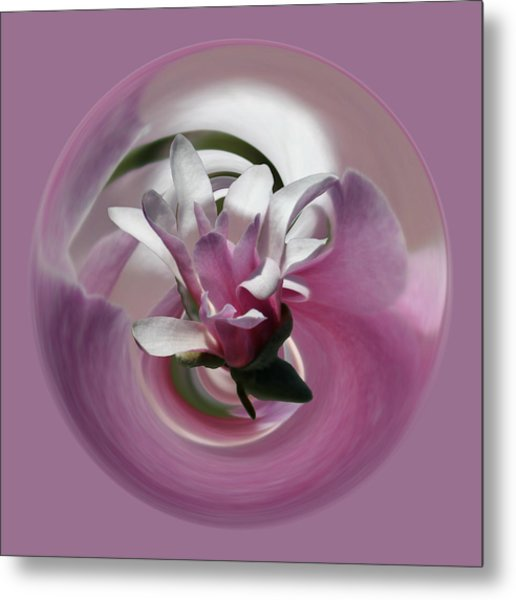 Metal Print featuring the photograph Pink Magnolia by Jim Baker