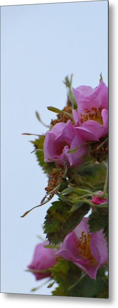 Pink On The Edge Metal Print by Jean Booth