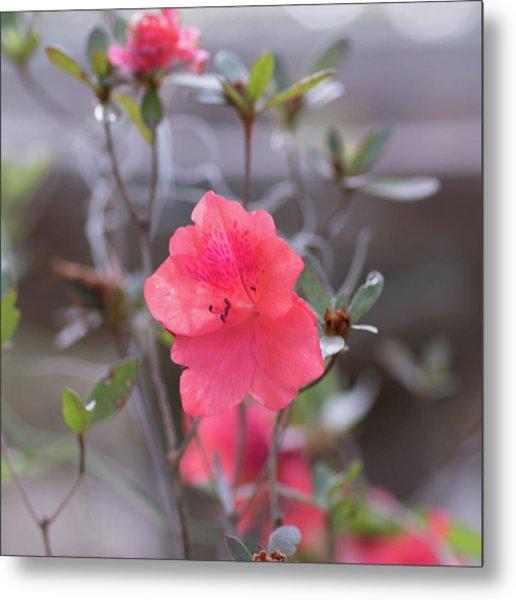 Pink Orange Flower Metal Print