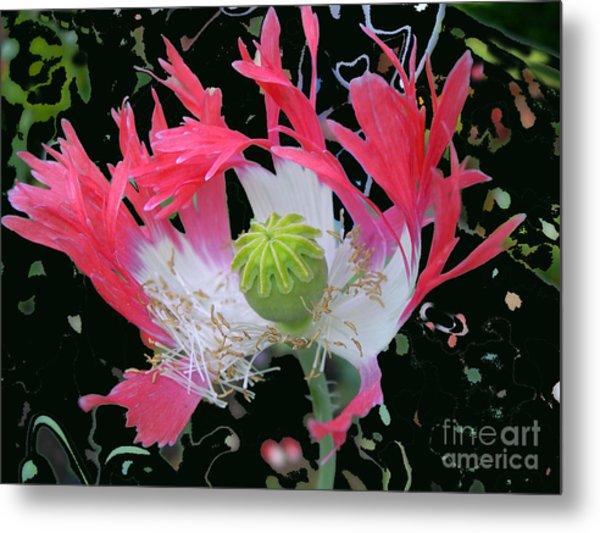 Pink Poppy Metal Print by Addie Hocynec