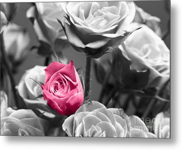 Pink Rose Metal Print by Blink Images