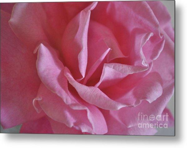 Pink Rose Metal Print
