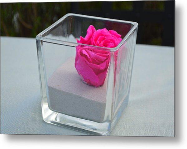 Pink Rose In Venice Metal Print