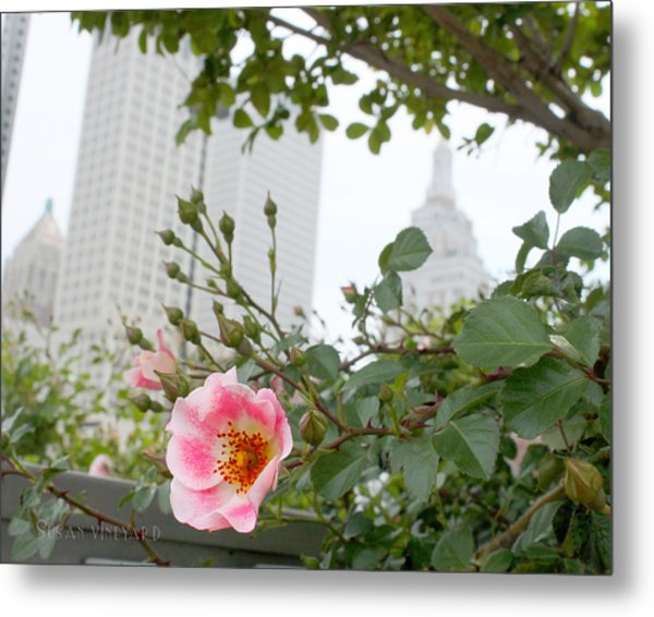 Pink Rose Of Tulsa Metal Print