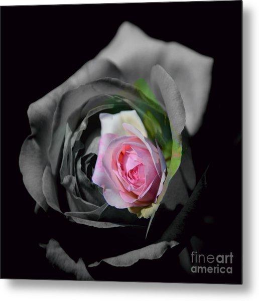 Pink Rose Shades Of Grey Metal Print