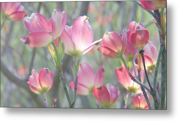 Pink Splendor Metal Print