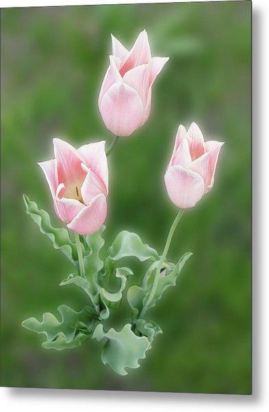 Pink Tulips Metal Print by Rockstar Artworks