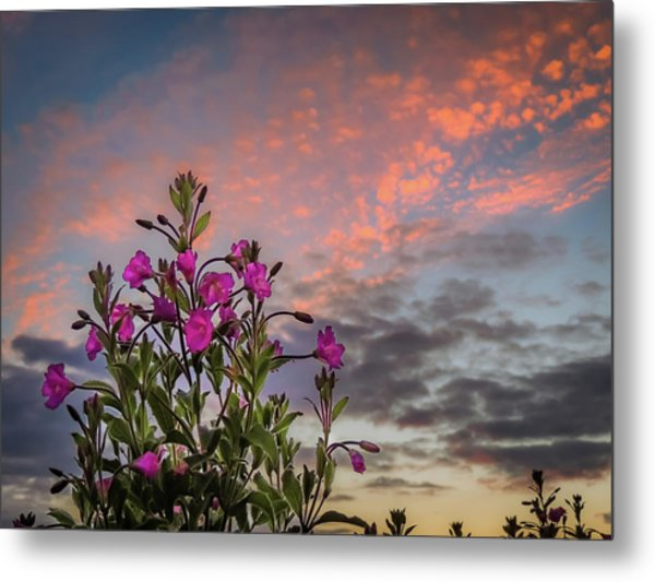 Metal Print featuring the photograph Pink Wildflowers At Sunset by James Truett