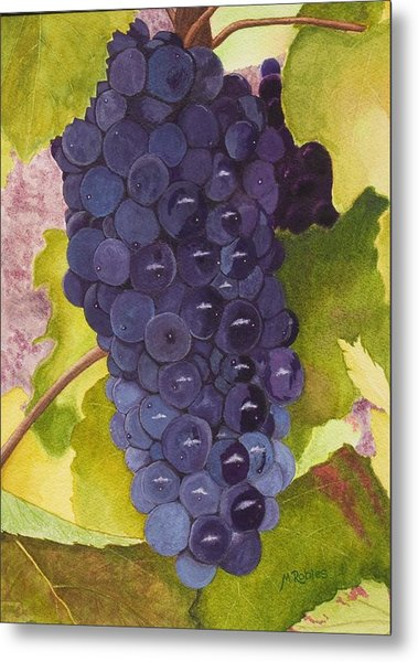 Pinot Noir Ready For Harvest Metal Print