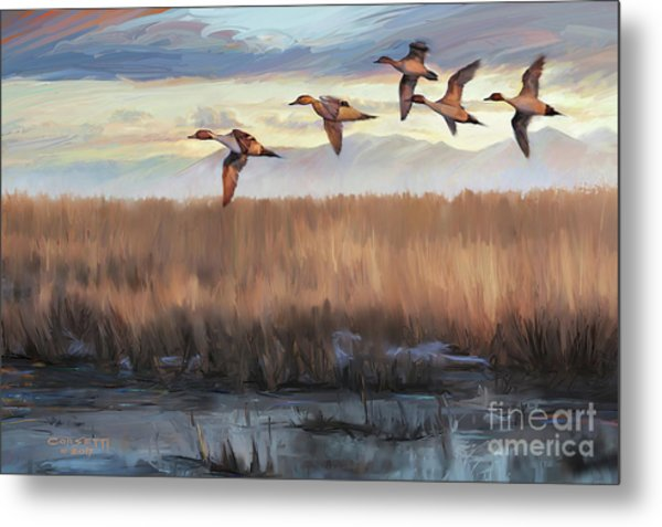 Pintail Fly By Metal Print