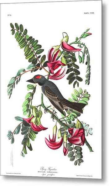 Piping Flycatcher Metal Print