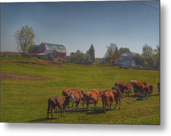 1014 - Plain Road Farm And Cows I Metal Print