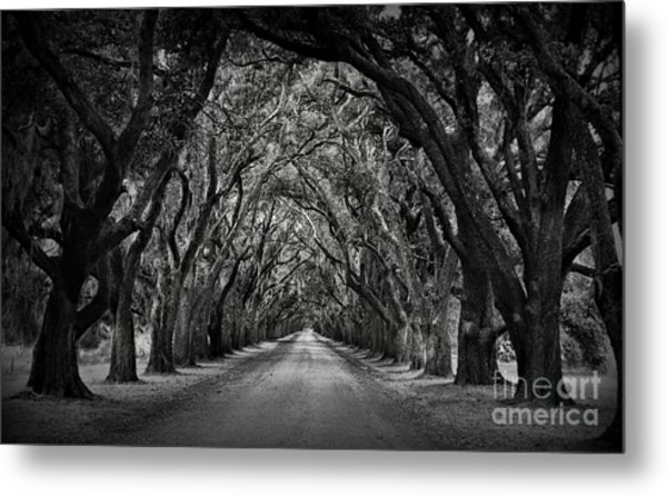 Plantation Oak Alley Metal Print